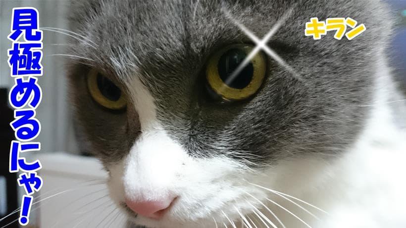 肥満を見極めると目を光らせる体の愛猫モコ
