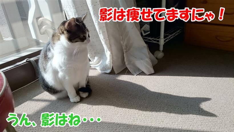 影は痩せていると現実逃避している体の愛猫ミミ
