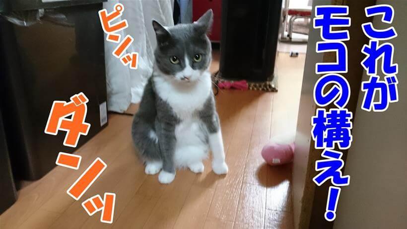 災害への心構えと聞いて自分の構えを披露する体の愛猫モコ