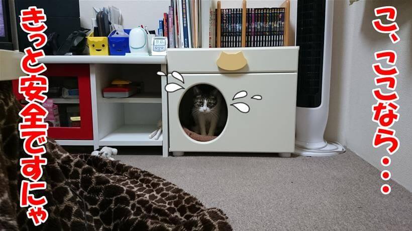 ペットハウスに避難する愛猫ミミ