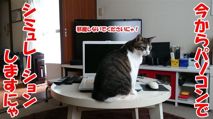 パソコンを使って防災シミュレーションをする体の愛猫ミミ