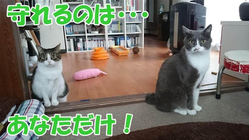 災害時に猫を救えるのは飼い主だけ!