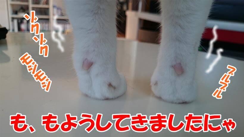 おしっこしたくてモジモジしている体の愛猫ミミの足