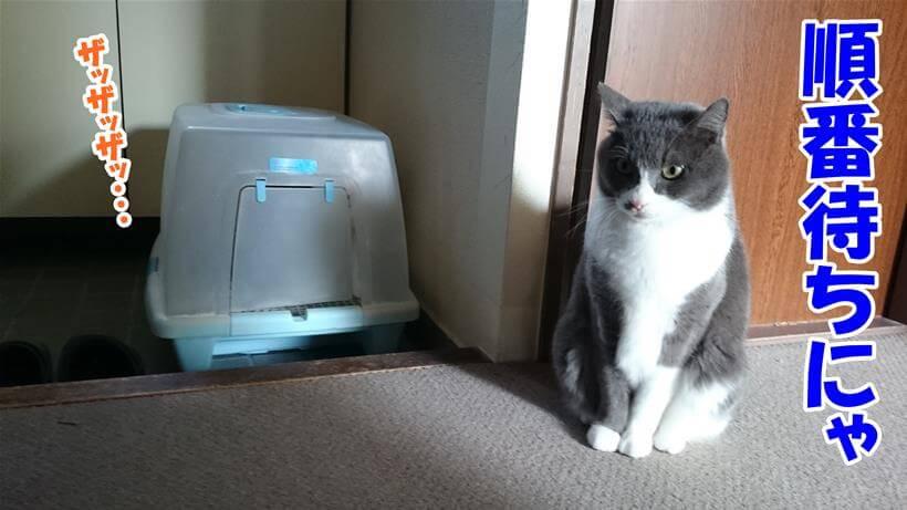 トイレの順番待ちしている体の愛猫モコ