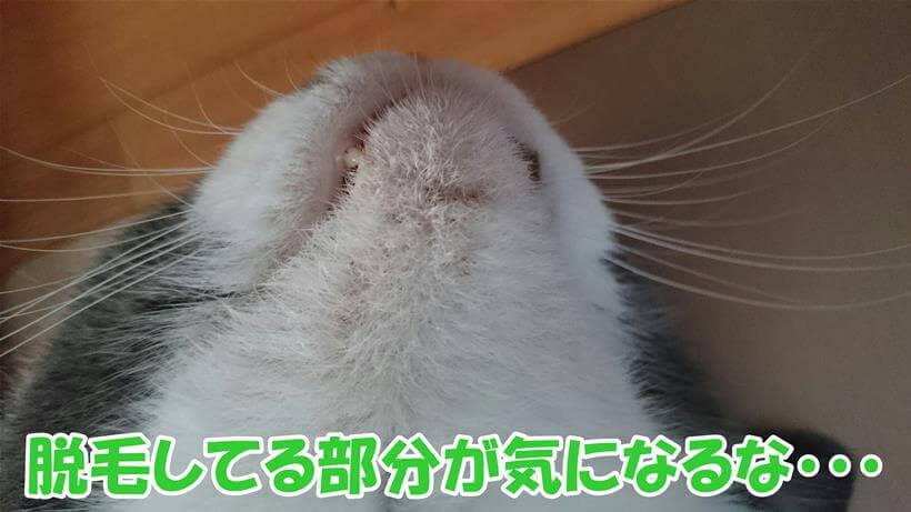 ニキビのある部分が脱毛している愛猫モコ