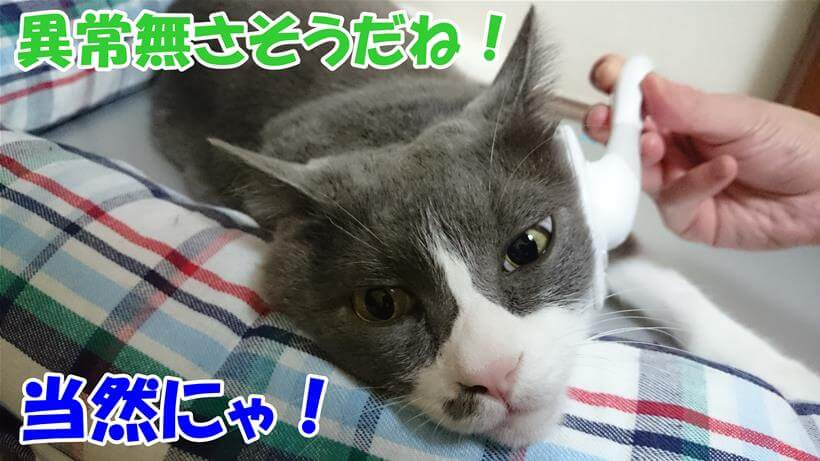 ブラッシングされながら健康管理されている愛猫モコ