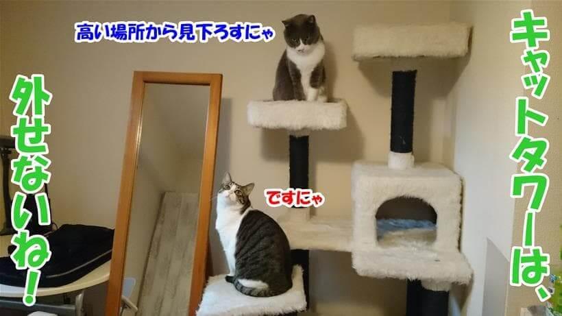 キャットタワーは猫を飼う上で必需品