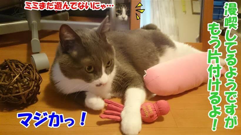 猫のおもちゃを片付けられると知って焦っている体の愛猫たち
