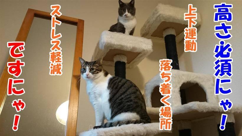 キャットタワーを例にケージの条件をレクチャーする愛猫たち