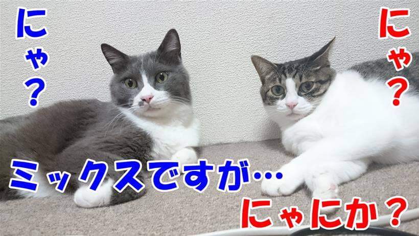 猫種がミックスの愛猫たち