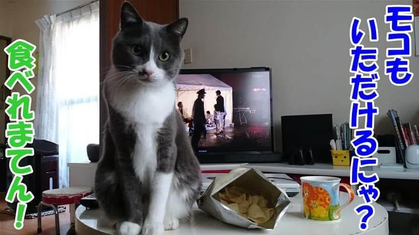 人間の食べ物を食べて良いのか質問する体の愛猫モコ