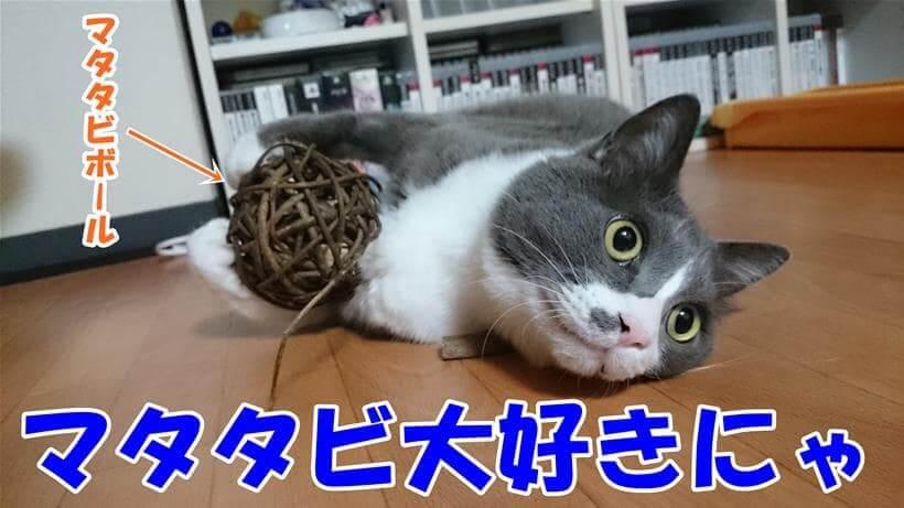 大好きなマタタビボールを抱えている愛猫モコ