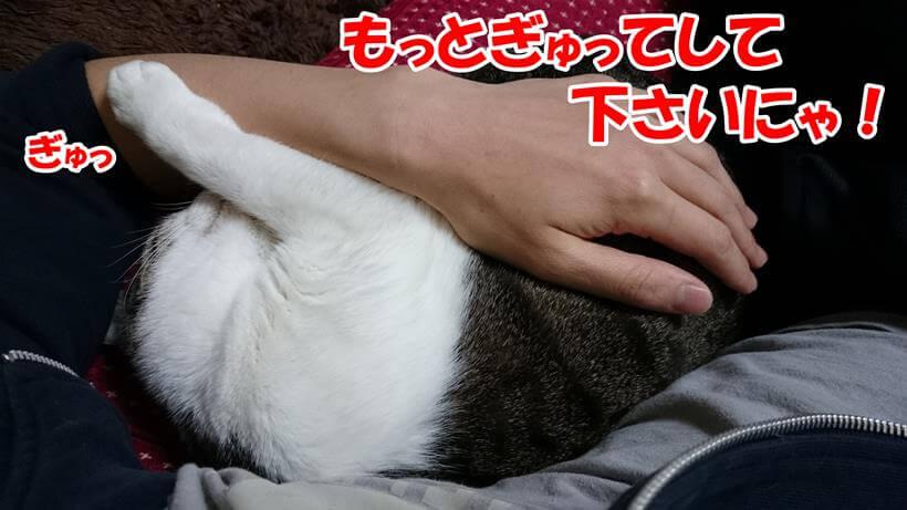 もっとぎゅっとして欲しい体で自分も飼い主の腕をぎゅっとする愛猫ミミ
