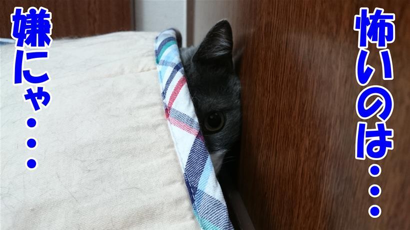 怖いのは嫌だと隠れている体の愛猫モコ