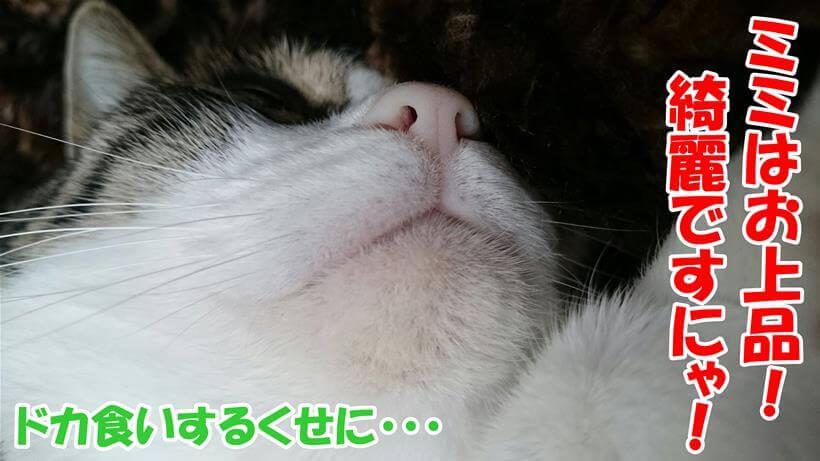 上手に食べているので綺麗な顎をしている愛猫ミミ