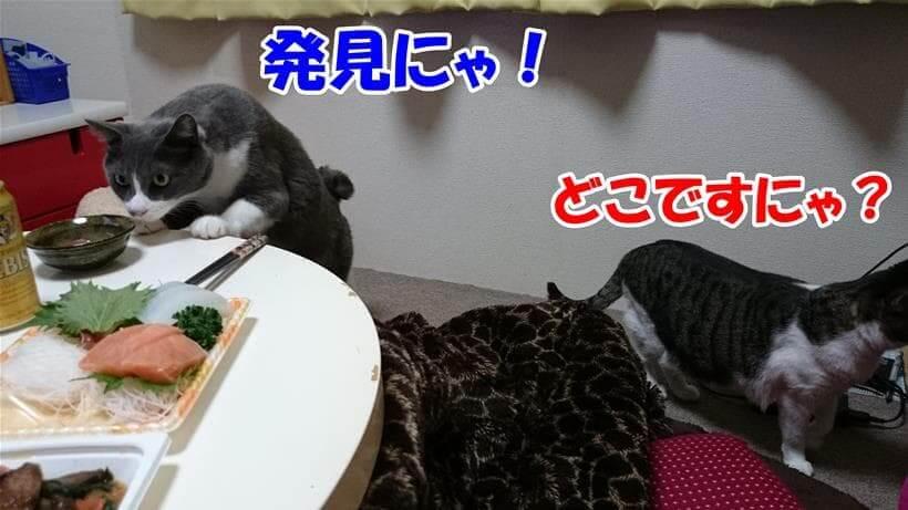 匂いで捜し物(食べ物)を見つける体の愛猫モコと見つけられない体の愛猫ミミ