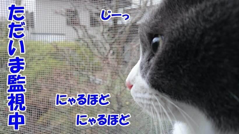 外を眺めている愛猫モコ