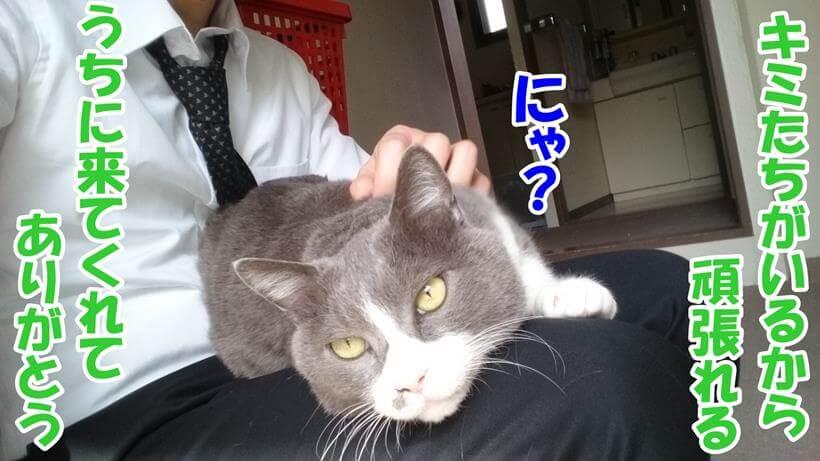 膝の上に乗る愛猫に感謝する飼い主