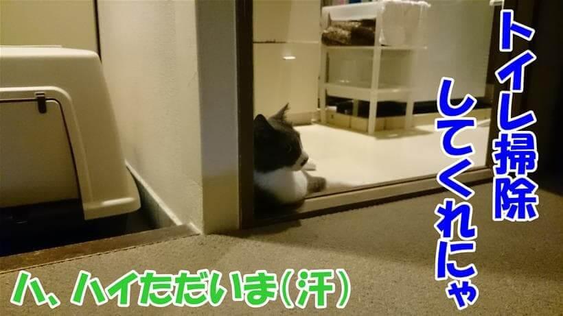 トイレ掃除をしてくれとトイレの前で座り込みしている愛猫モコ