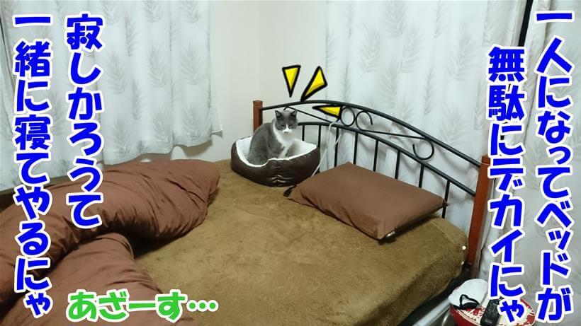 男一人で寝るのは寂しかろうと一緒に寝てくれると言う体の愛猫モコ