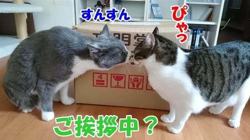 愛猫ミミの匂いを嗅ぐ愛猫モコ