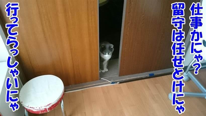 留守は任せておけ!と飼い主を見送る体の愛猫モコ