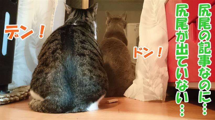 尻尾を撮影しようとしたら尻尾をお尻の下に収納して座っていた愛猫たち