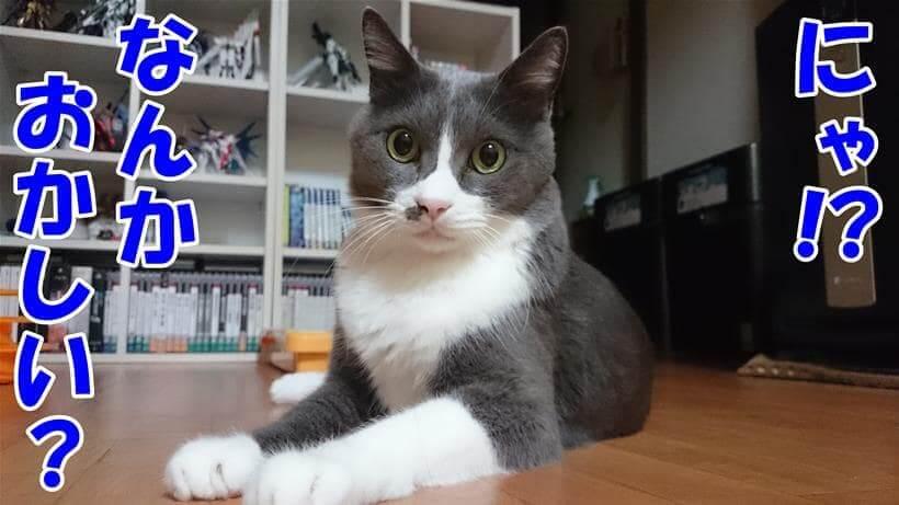 何かがおかしいと不思議に思う体の愛猫モコ