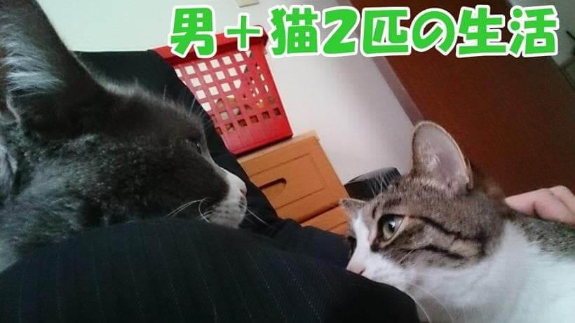 男の飼い主と2匹の愛猫
