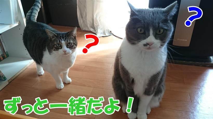 ずっと一緒だよ!っと言う飼い主に対して何言ってんだ?って表情の愛猫たち