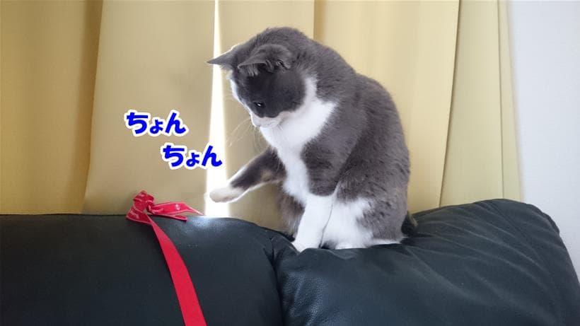 リボンで遊んでいる愛猫モコ