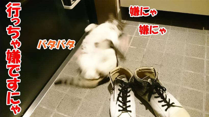 飼い主に出掛けちゃ嫌だと玄関で駄々をこねる体の愛猫ミミ