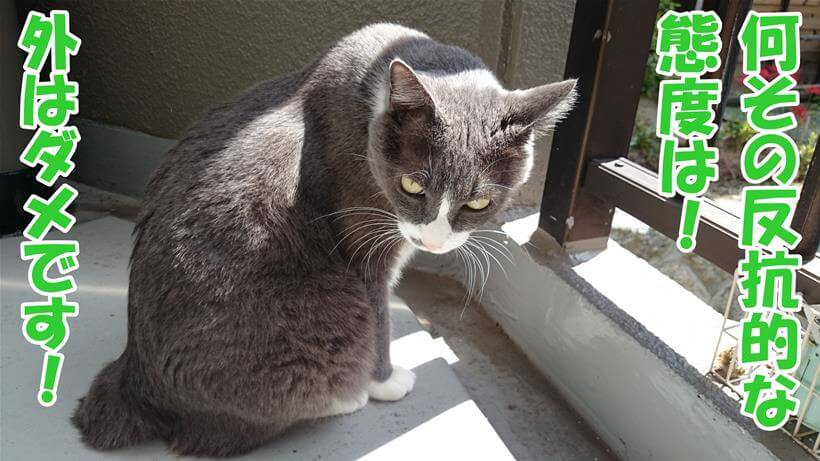 ベランダに出て反抗的な態度を見せる体の愛猫モコ