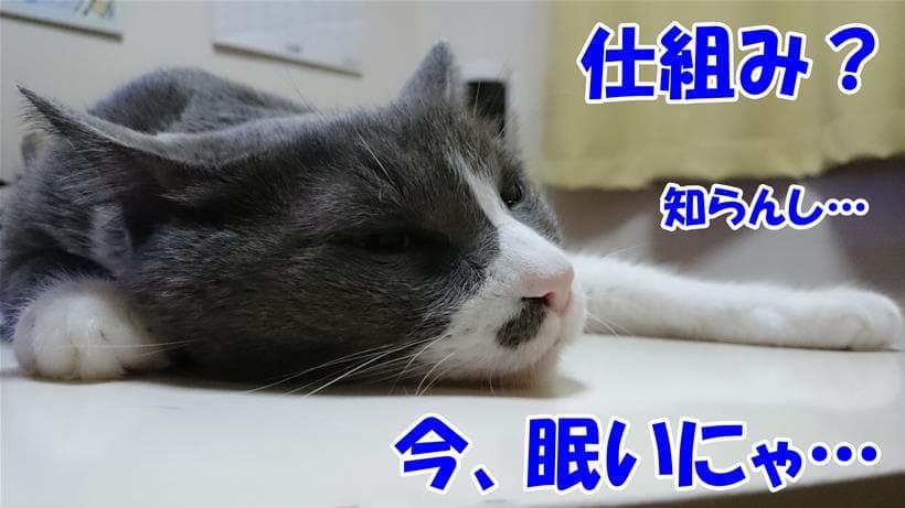 猫がゴロゴロ鳴らす仕組みとか眠くてどうでも良い体の愛猫モコ