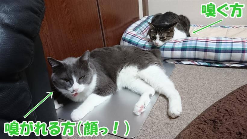 愛猫モコのお尻を嗅いでいる愛猫ミミ