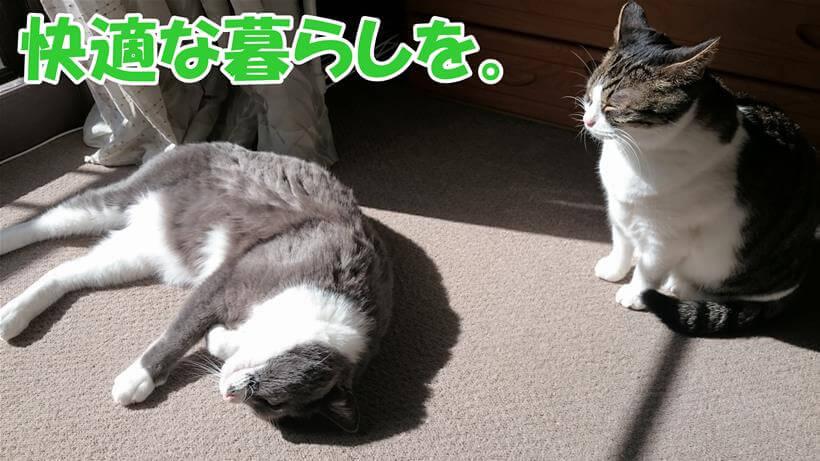 日向ぼっこしている愛猫たち