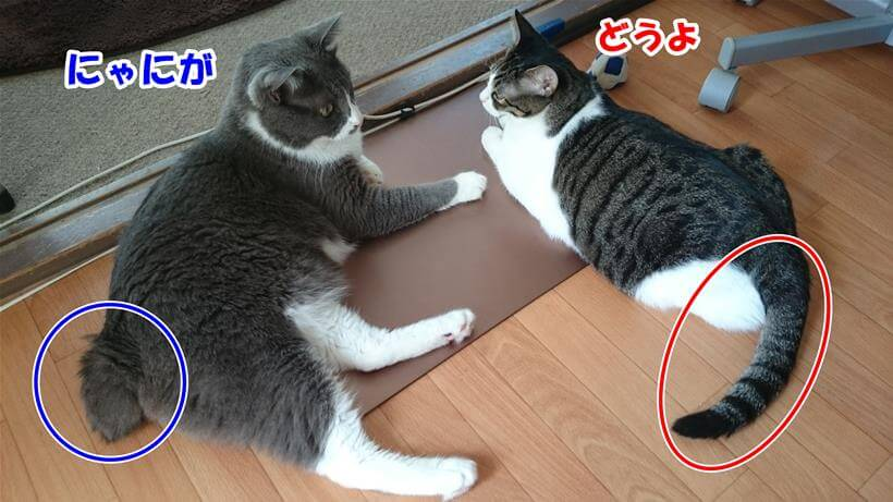 それぞれ違う愛猫たちの尻尾