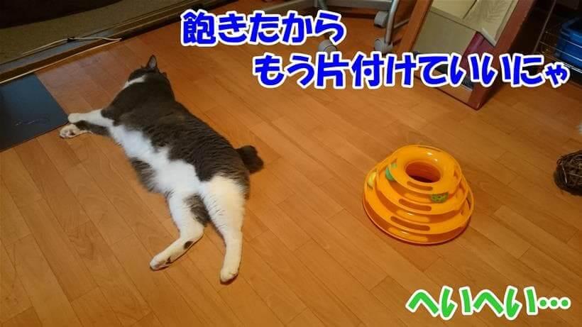 猫のおもちゃに飽きたご様子の愛猫モコ