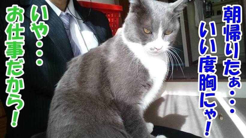 仕事で朝帰りした飼い主に怒っている体の愛猫モコ
