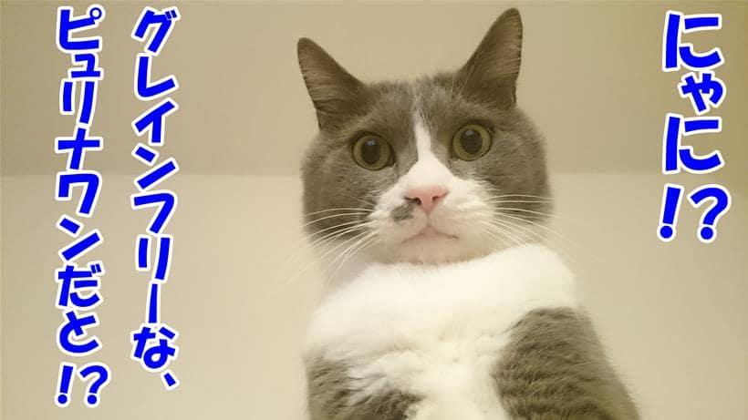 グレインフリーのピュリナワン登場に驚いている体の愛猫モコ