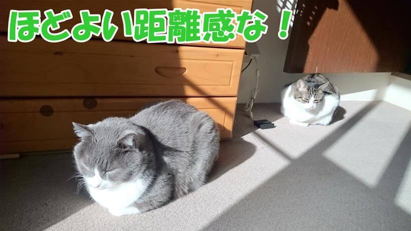 ほど良い距離感を保つ愛猫たち
