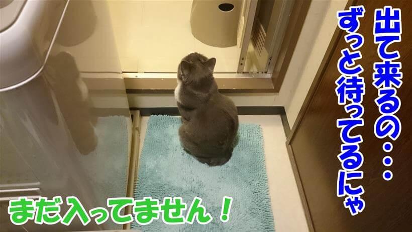 入る前からお風呂に入る飼い主を外で待ち続ける愛猫モコ