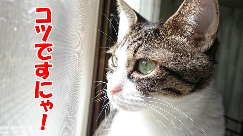 猫を長生きさせるコツを解説する体の愛猫ミミ