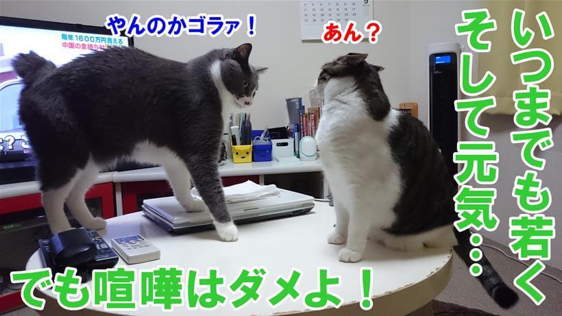 喧嘩しはじめる愛猫たち