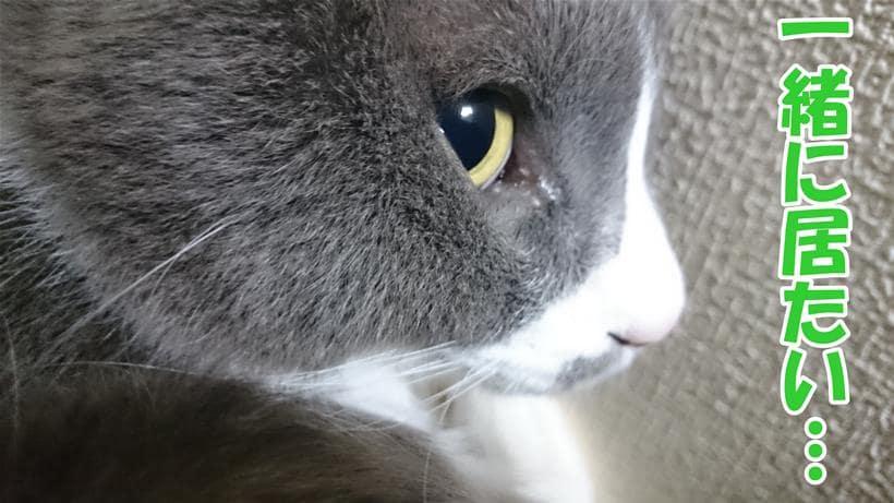 愛猫モコの横顔を眺めながら一緒に居たいと願う