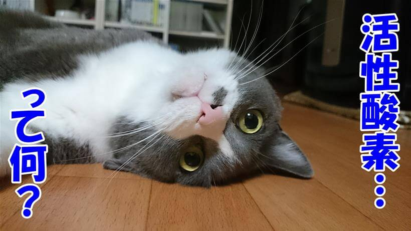 活性酸素って何?って質問している体の愛猫モコ