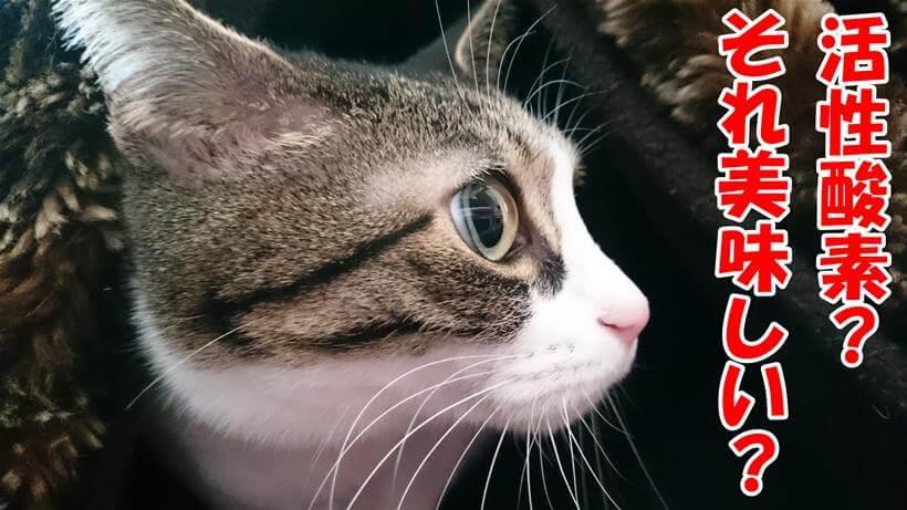 活性酸素を知らない体の愛猫ミミ