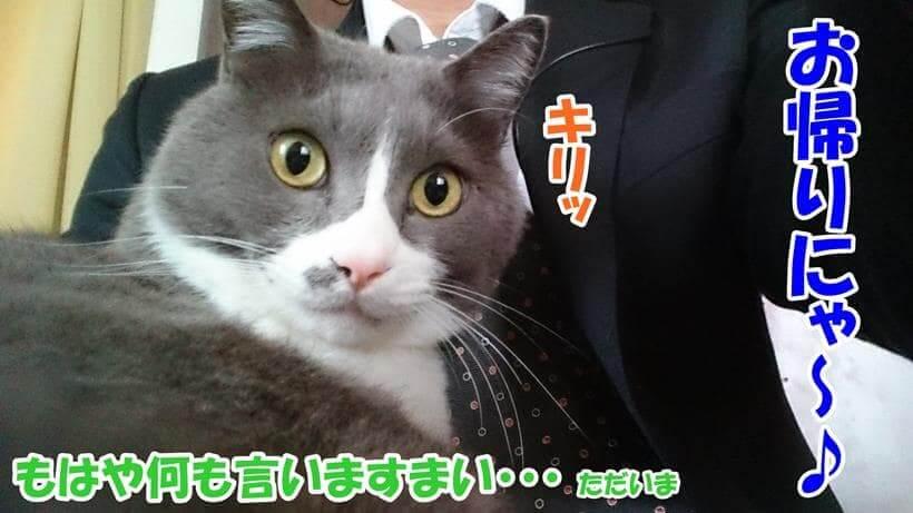 スーツを着ている飼い主の膝上に乗る愛猫モコ