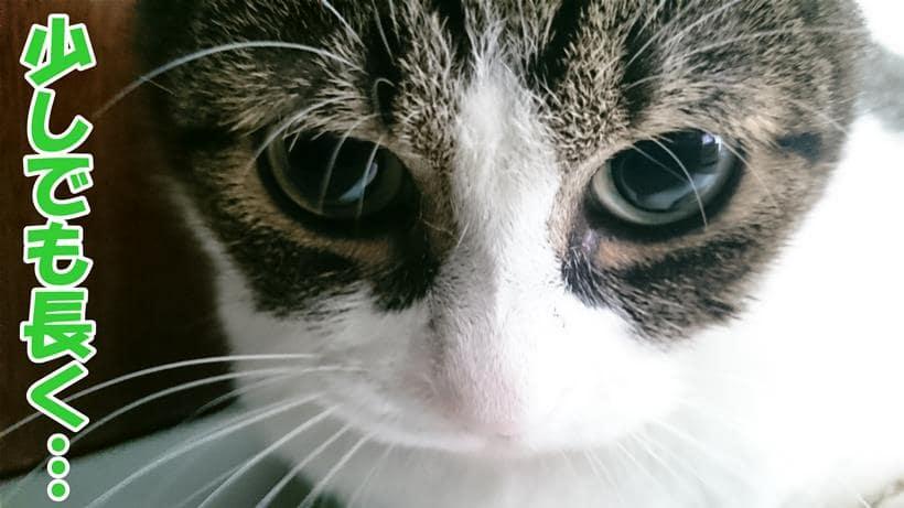 少しでも長く生きて欲しいと願い愛猫ミミ顔を見つめる