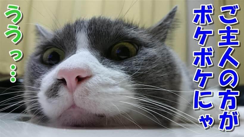 飼い主の方がボケボケだと言っている体の愛猫モコ